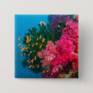 South Pacific, Fiji, Viti Levu, Bligh Water, 2 Inch Square Button