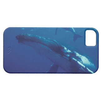 South Pacific, Tonga. humpback whale and calf iPhone 5 Cover