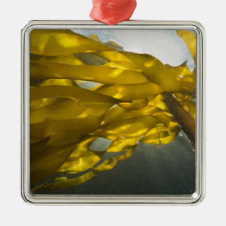South side of Ewing Island, San Juan Islands, Silver-Colored Square Ornament