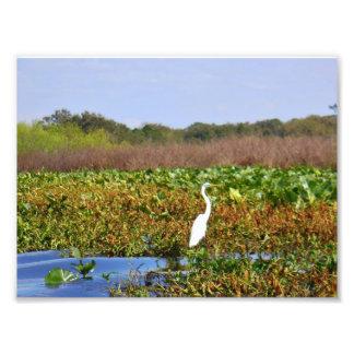 Southern Bird Photographic Print