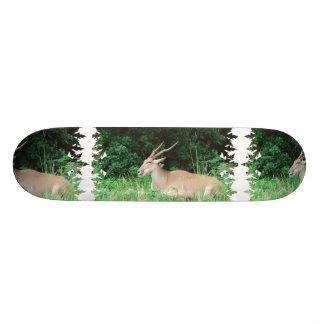 Southern Eland Habitat  Skateboard