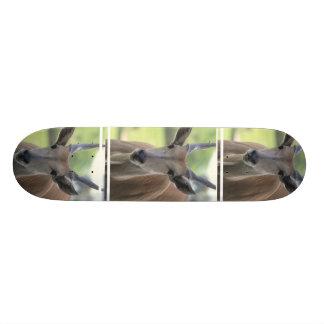 Southern Eland Skateboard