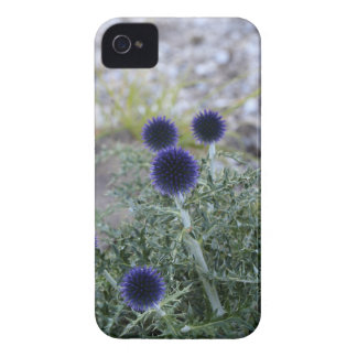 Southern globe thistle (Cardo pallotta) iPhone 4 Case-Mate Case