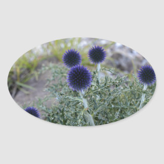 Southern globe thistle (Cardo pallotta) Oval Sticker
