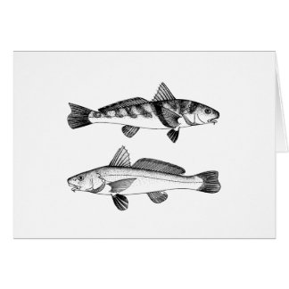 Southern - Gulf Kingfish Card