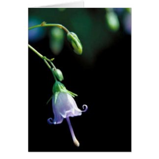 Southern Harebell Card