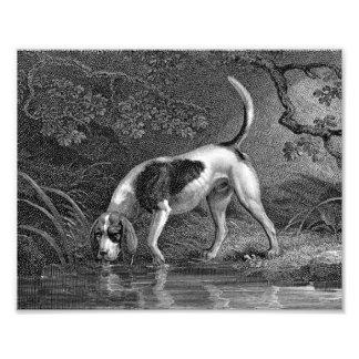 Southern Hound Dog Illustration Photographic Print