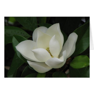 Southern Magnolia Bloom Card