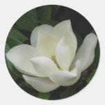 Southern Magnolia Bloom Round Sticker