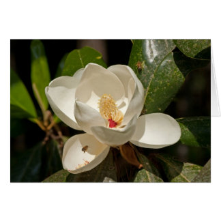 Southern Magnolia Flower Card
