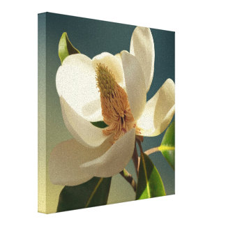 Southern Magnolia flower, romantic Canvas Print