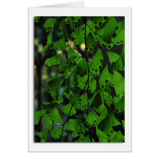 Southern Maidenhair Fern Note Card