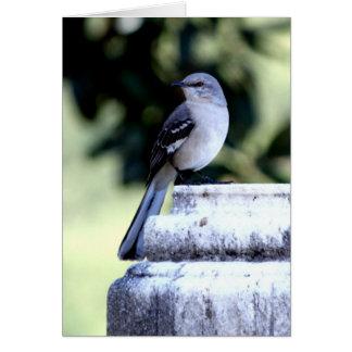 Southern Mockingbird Card