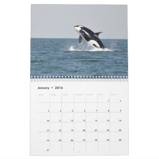 Southern Resident Killer Whales Wall Calendars