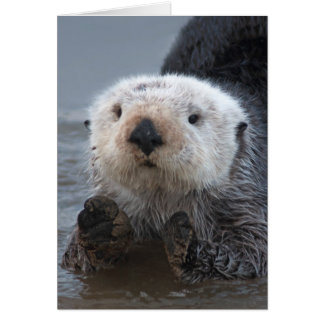 Southern Sea Otter (Enhydra lutris) Card
