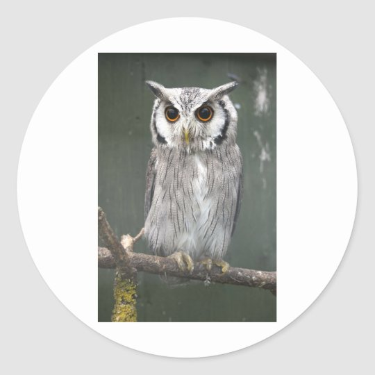 Southern White Faced Owl Classic Round Sticker