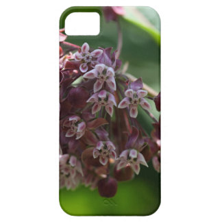 Southern Wormwood (Artemisia abrotanum) Case For The iPhone 5