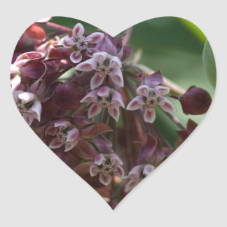 Southern Wormwood (Artemisia abrotanum) Heart Sticker
