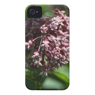 Southern Wormwood (Artemisia abrotanum) iPhone 4 Cover