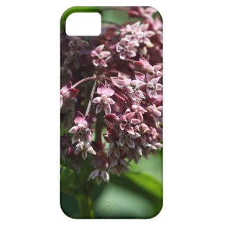 Southern Wormwood (Artemisia abrotanum) iPhone 5 Cases