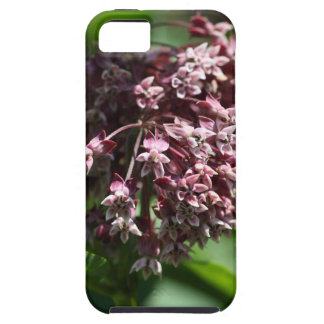 Southern Wormwood (Artemisia abrotanum) iPhone 5 Cover