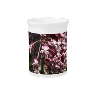 Southern Wormwood (Artemisia abrotanum) Pitcher