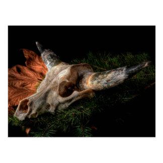 Southwest Cow Skull Post Card