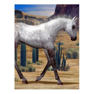 Southwest Foal Postcard