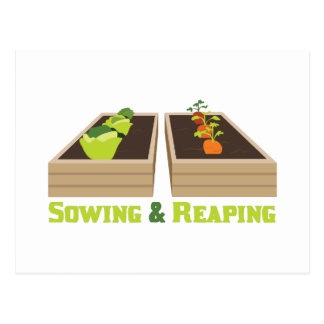 Sowing & Reaping Postcard