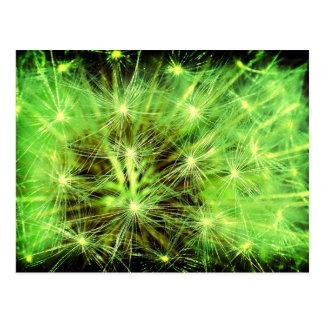 Space plant - Dandelion close up Lomo Postcard