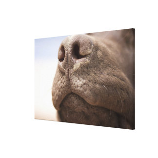 Spain, Costa Blanca, Close-up of chocolate Canvas Print