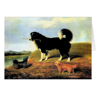 Spaniel and Two Norfolk Terriers Card