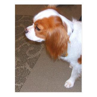 Spaniel Dog Postcard