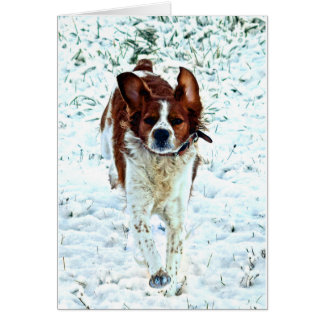 Spaniel in the Snow Card