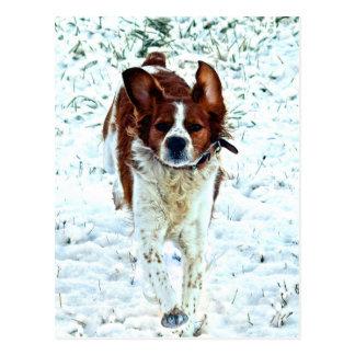 Spaniel in the Snow Postcard
