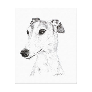 Spanish Greyhound Canvas