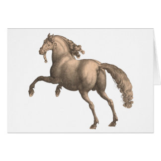 Spanish Horse - Greeting Card