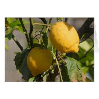 Spanish Lemon Greeting Cards