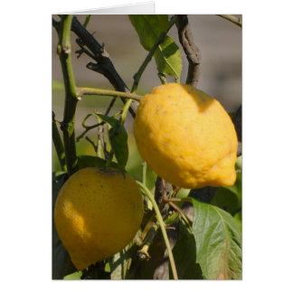 Spanish Lemon on the tree Greeting Cards