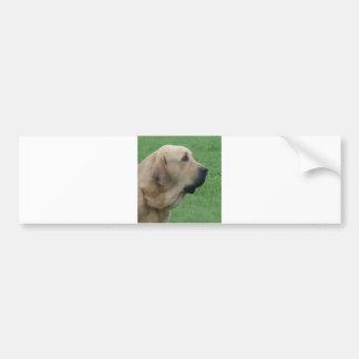 spanish ma.png bumper sticker