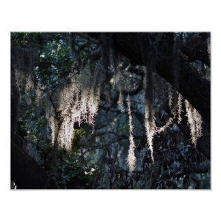 "Spanish Moss 14"" x 11"", Value Poster Paper (Matte)"