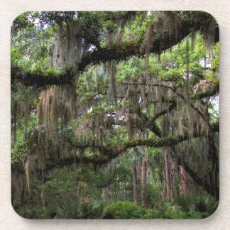 Spanish Moss Adorned Live Oak Coaster