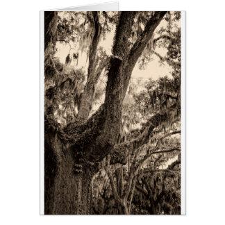 Spanish Moss Adorned Live Oak In Sepia Tones Card