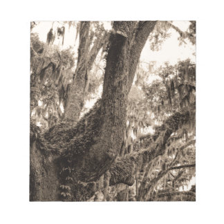 Spanish Moss Adorned Live Oak In Sepia Tones Notepads
