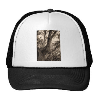 Spanish Moss Adorned Live Oak In Sepia Tones Trucker Hat