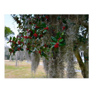Spanish Moss and American Holly Postcard
