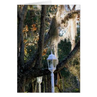 Spanish Moss, Micanopy, Florida Card