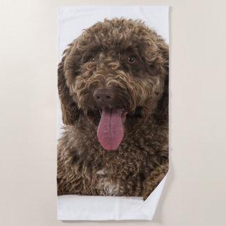 Spanish water dog beach towel