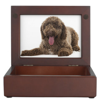Spanish water dog keepsake box