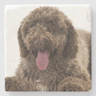 Spanish water dog stone coaster